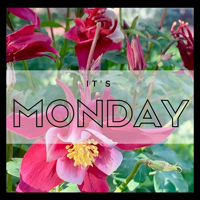 Happy Monday, y'all. We're glad to have this gorgeous spring weather back. Come see us today and tell us what you're growing this season! • • • #growitbiglittleton #itsmonday #growingseason #springtime #growbig #growplants #growtrees #hydroponics #hydro #plantshop #growstore #gardensupplies #indoorgardening #growindoors #denvergrown #denvergrowers #denvergardening #coloradohigh #greenthumb #organicgardening #watergrowsplants #waterfeedsplants #littletoncolorado #growathome #feedyourself #growyourown #homegardener #localbusiness #veteranowned #veteranownedbusiness