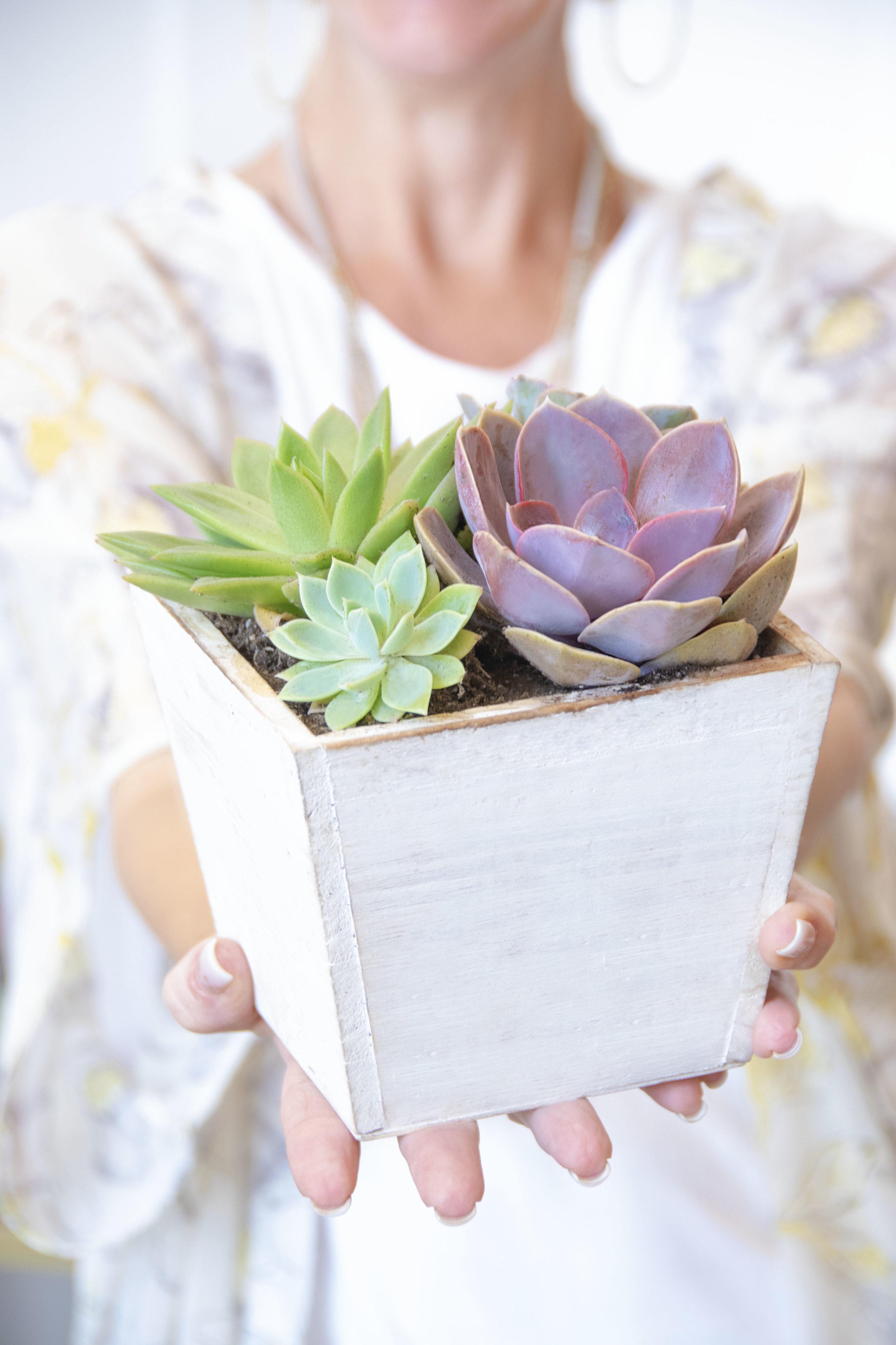 Beautiful Succulent Gift Planter Hostess Gift