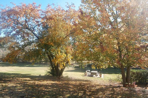 Copy of Copy of Balmoral B&B Accommodation — beautiful outdoors!