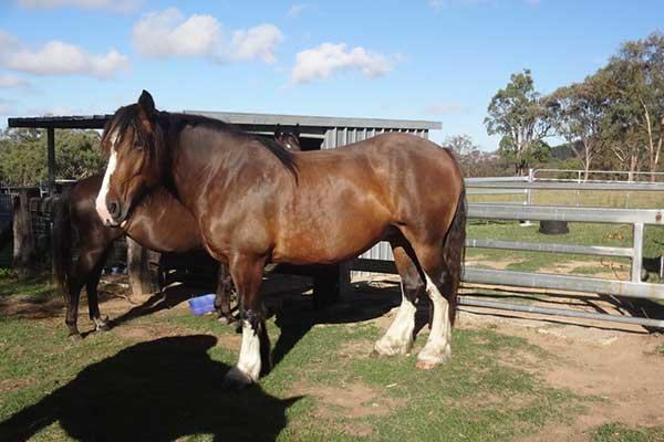 yarralong-bnb-accommodation-horse.jpg
