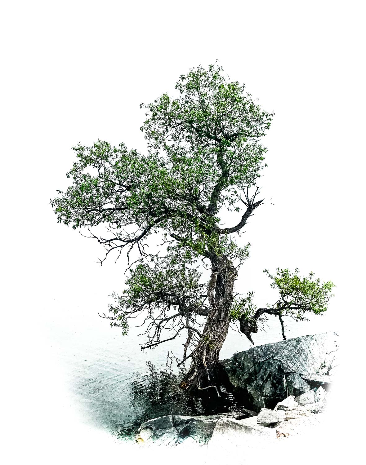 bonsai on the lake 2