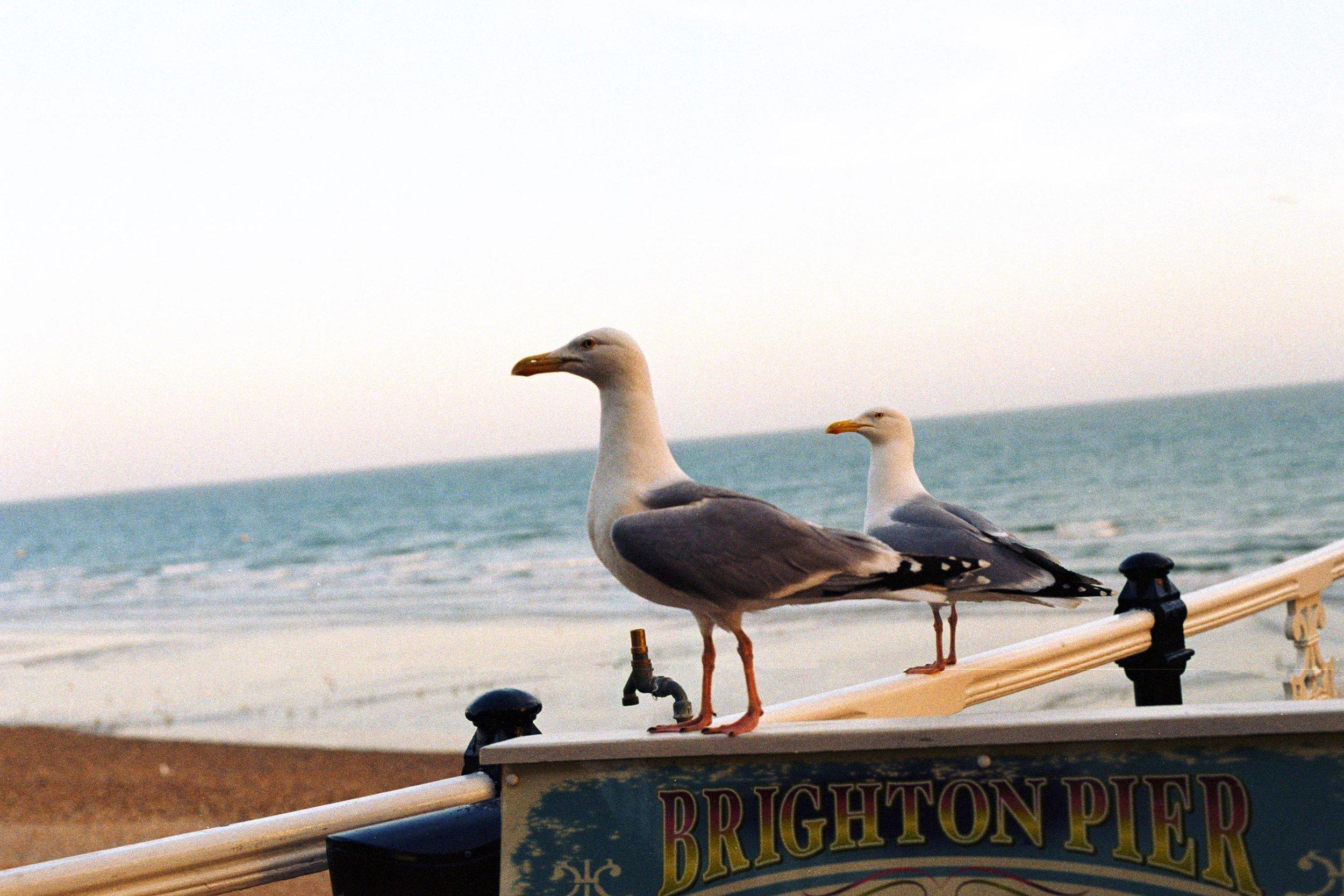 Brighton May 18 Pro Image 100.jpg