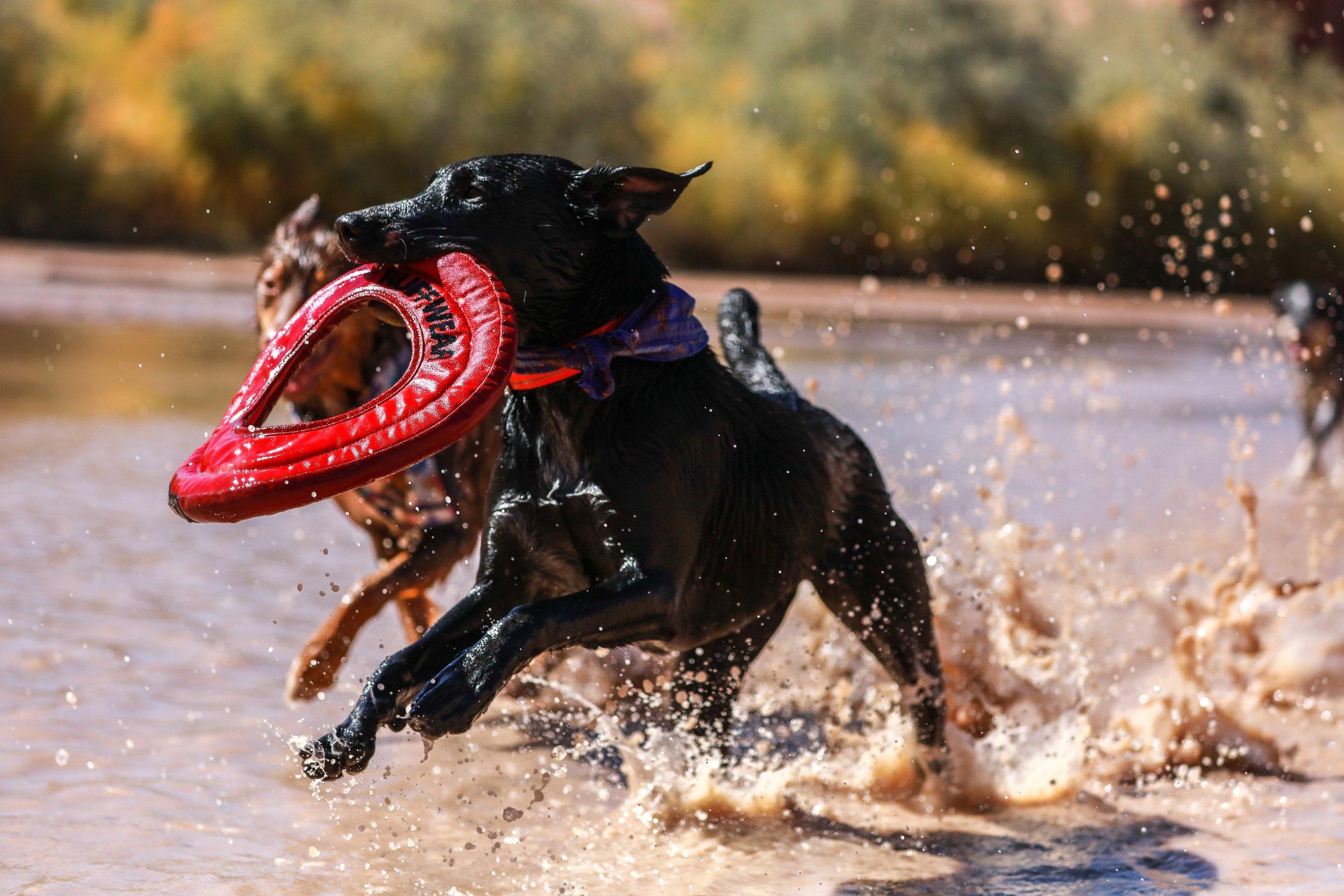 DOG TOYS -