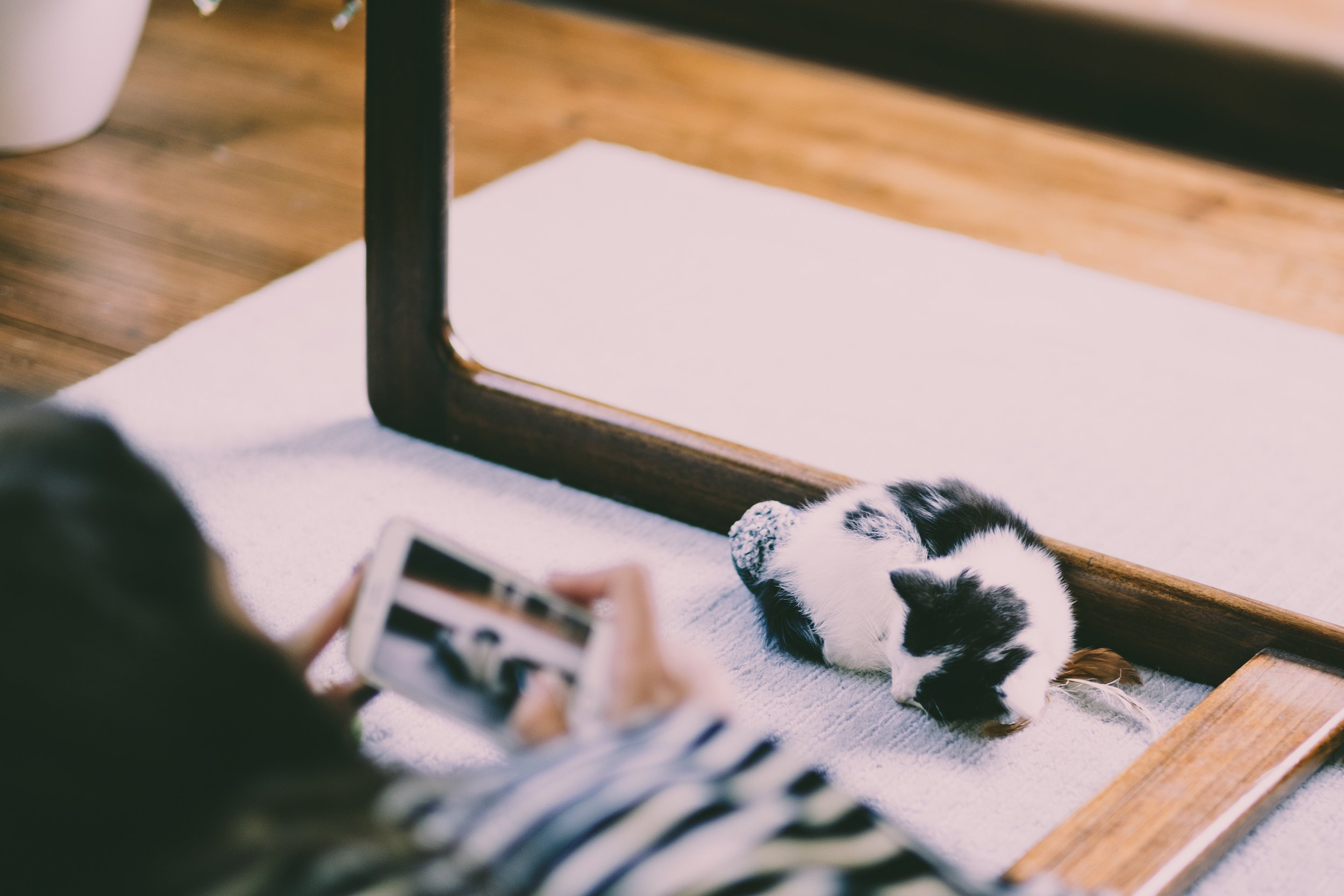 CAT BASICS -