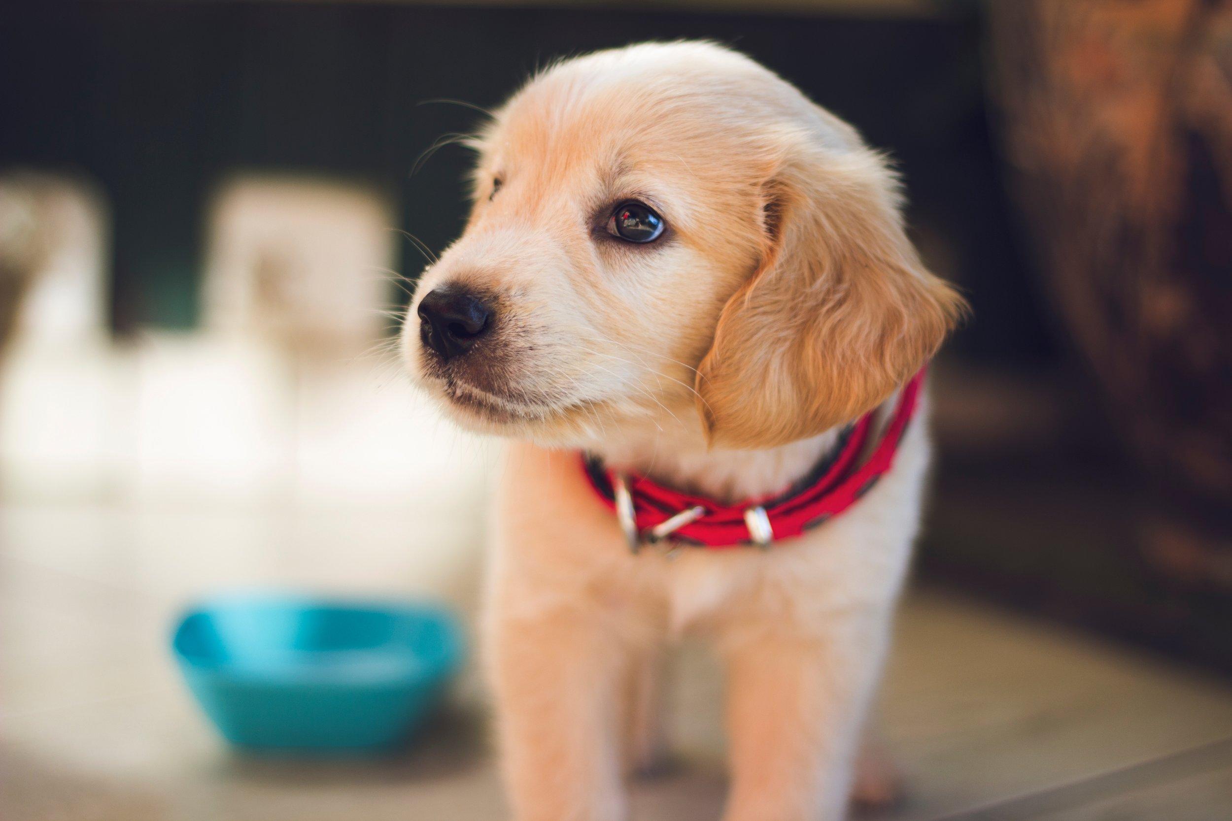 DOG BASICS -