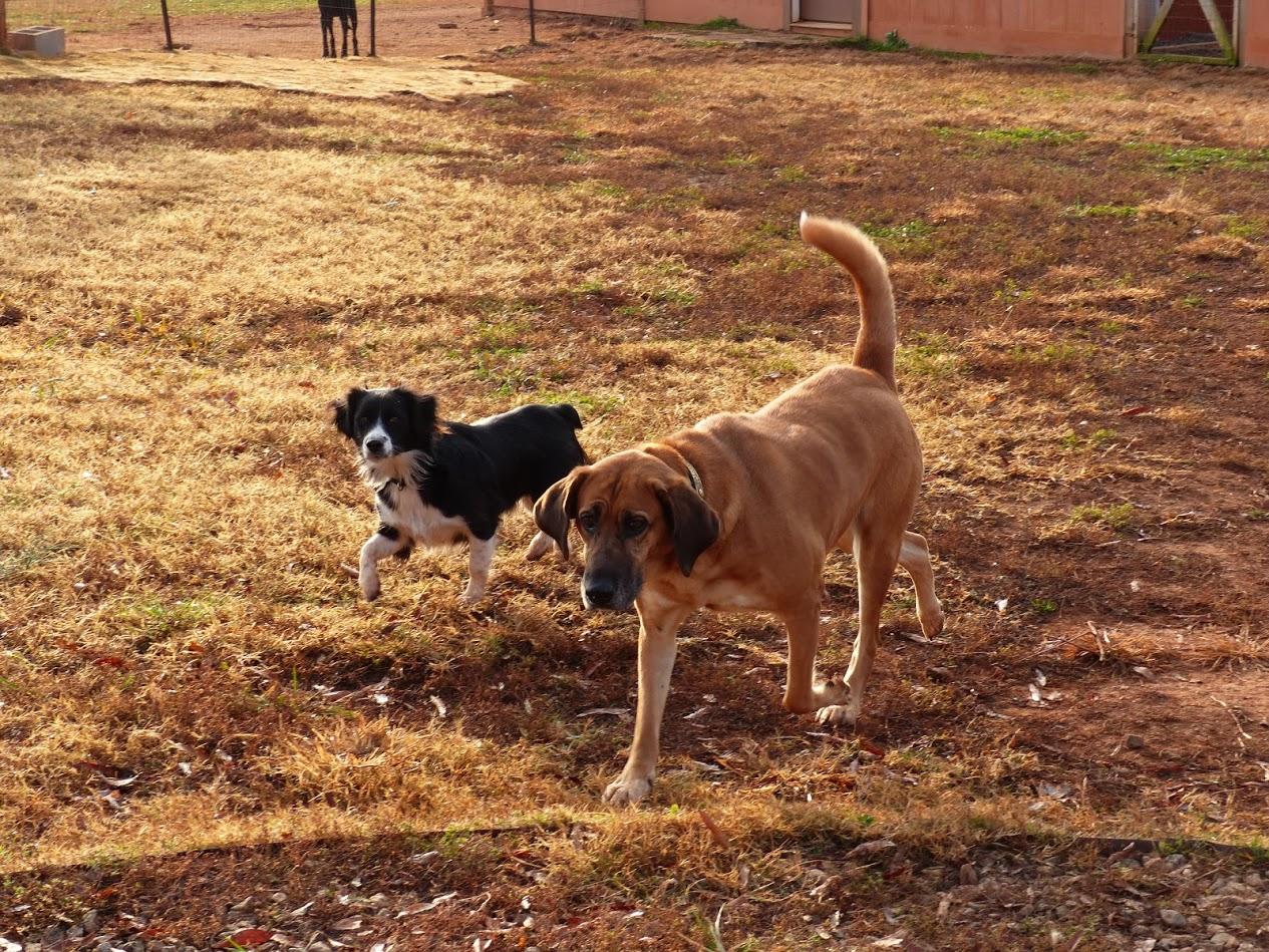 Bristol & Sam at doggie day care.JPG