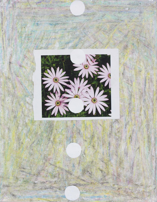 FlowerStudy16 copy.jpg