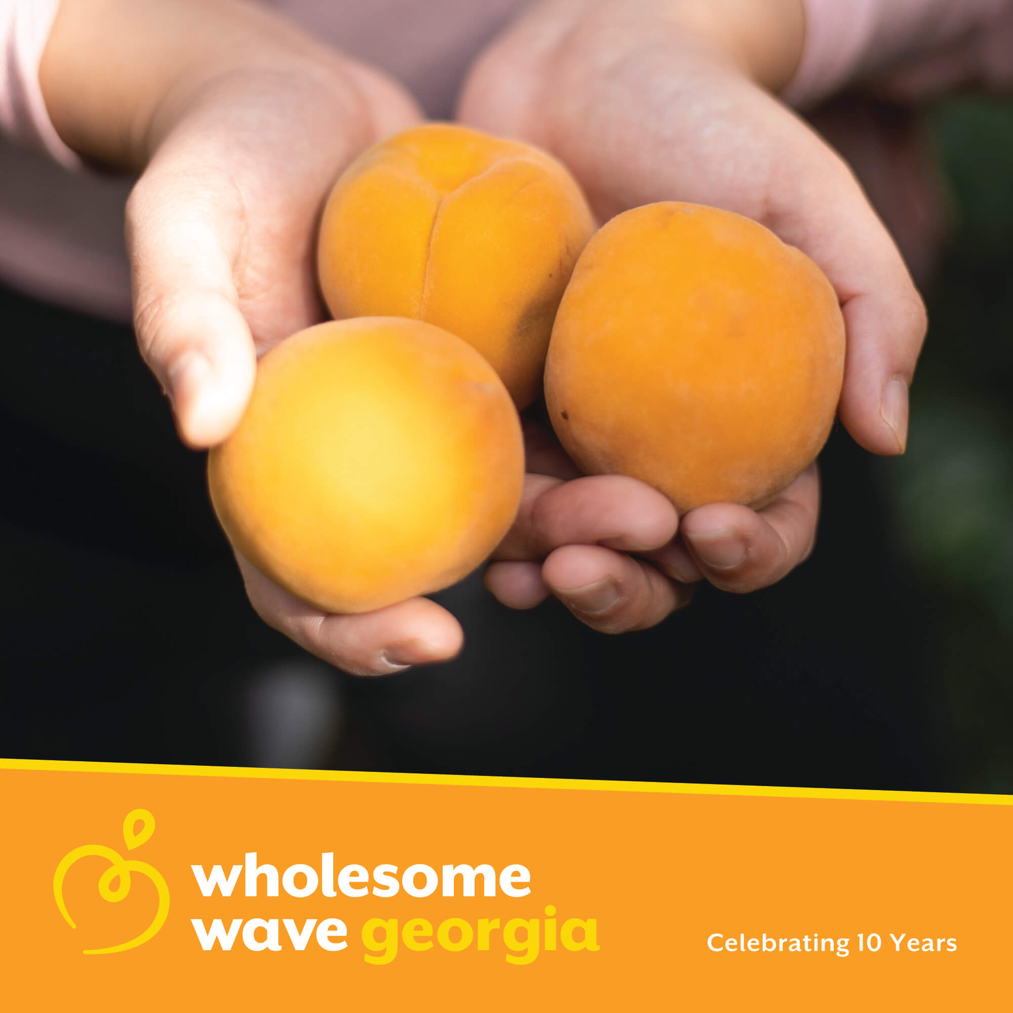 WHOLESOME WAVE GEORGIA - Brand Identity, Collateral