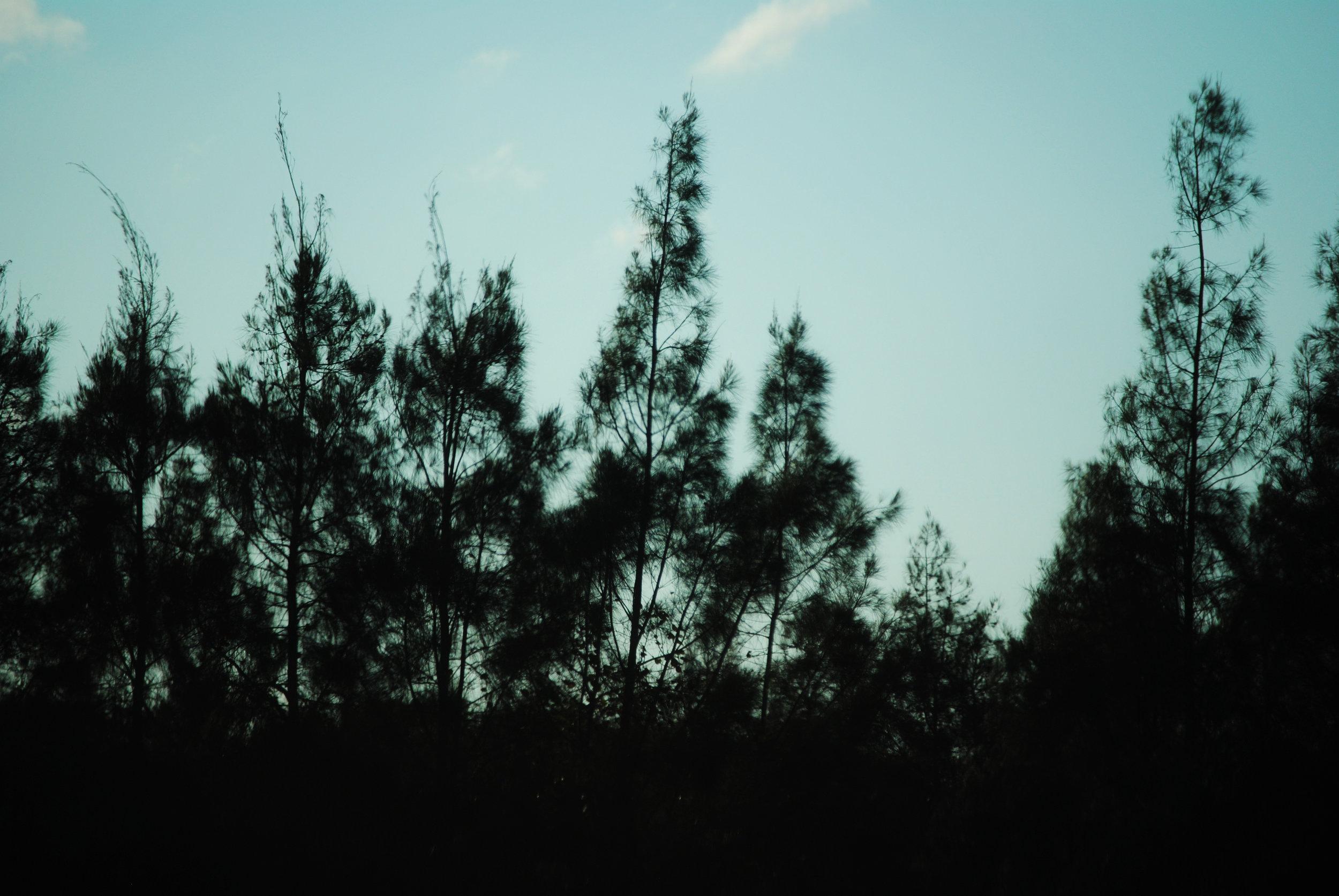 Creepy Pines.jpg
