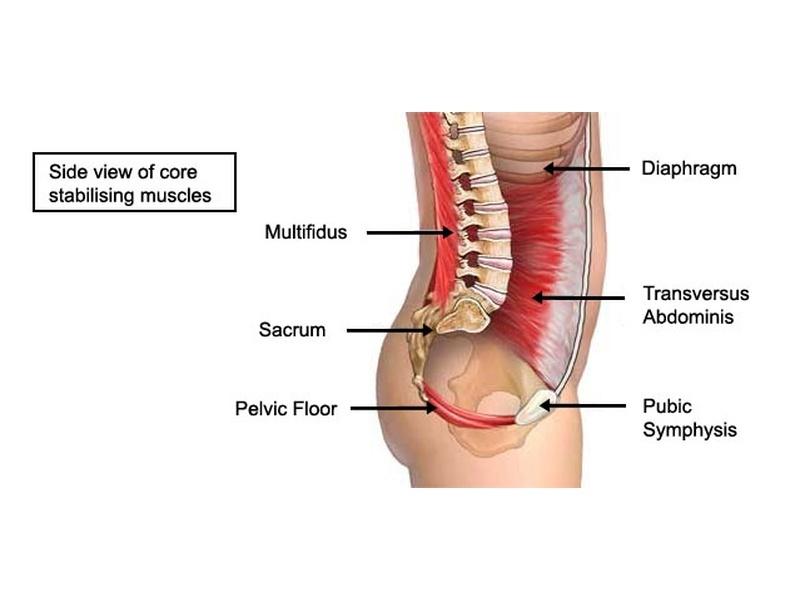 muscles-of-inner-core.jpg