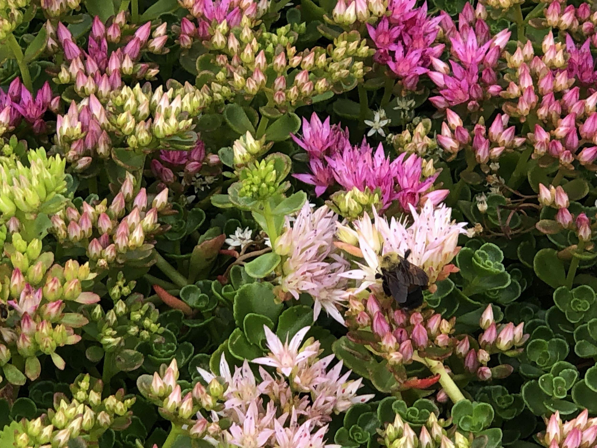 FLOWER+IMAGE_4.jpg