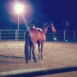 Doing energy healing work in an arena with a new horse who is at liberty to walk away. As you can see he's really enjoying his time with me!