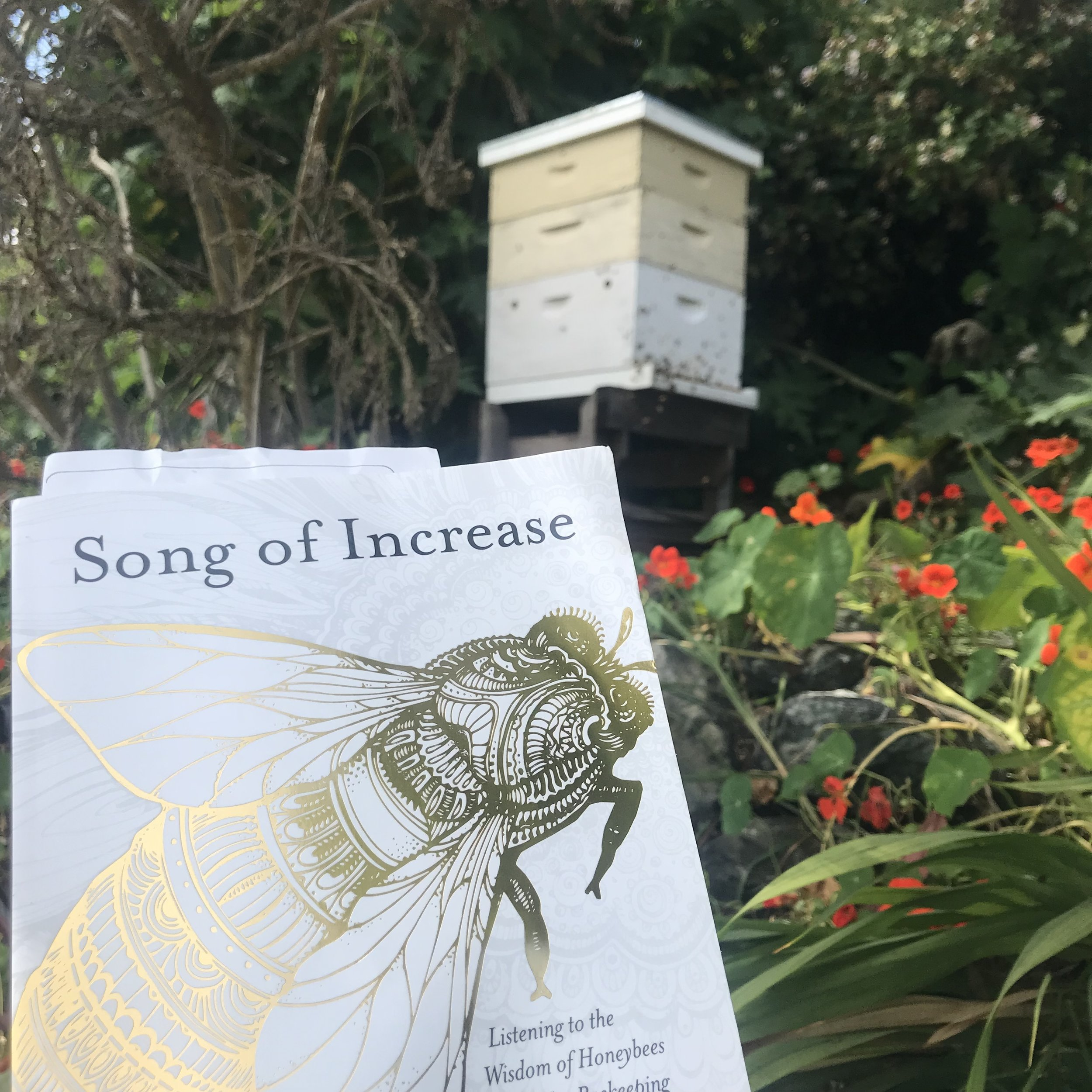 """""""Song of Increase: Listening to the Wisdom of Honeybees for Kinder Beekeeping and a Better World,"""" by Jacqueline Freeman"""