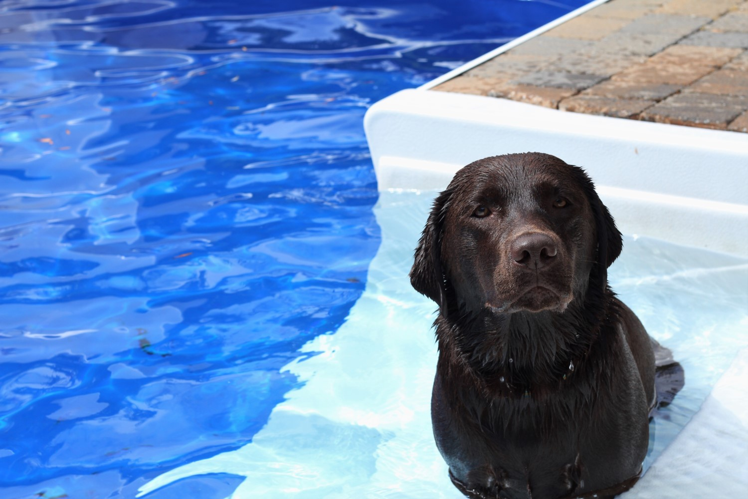 Pet Friendly - PoolHide is world-renowned for being durable enough to withstand pets.