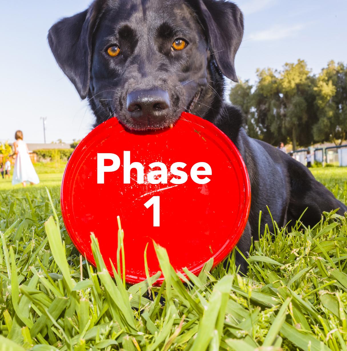 phase1.jpg