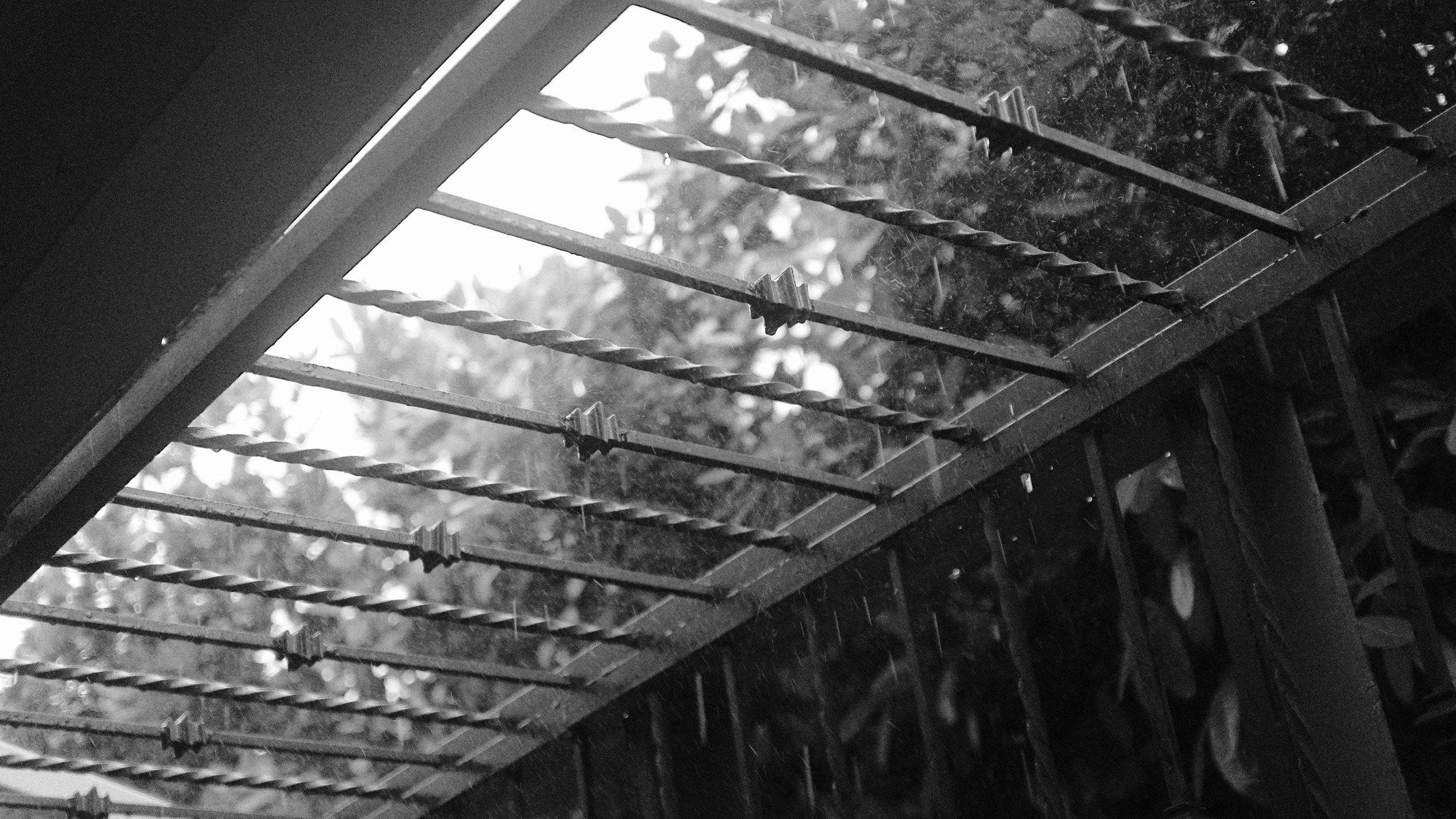 Carli's_rain