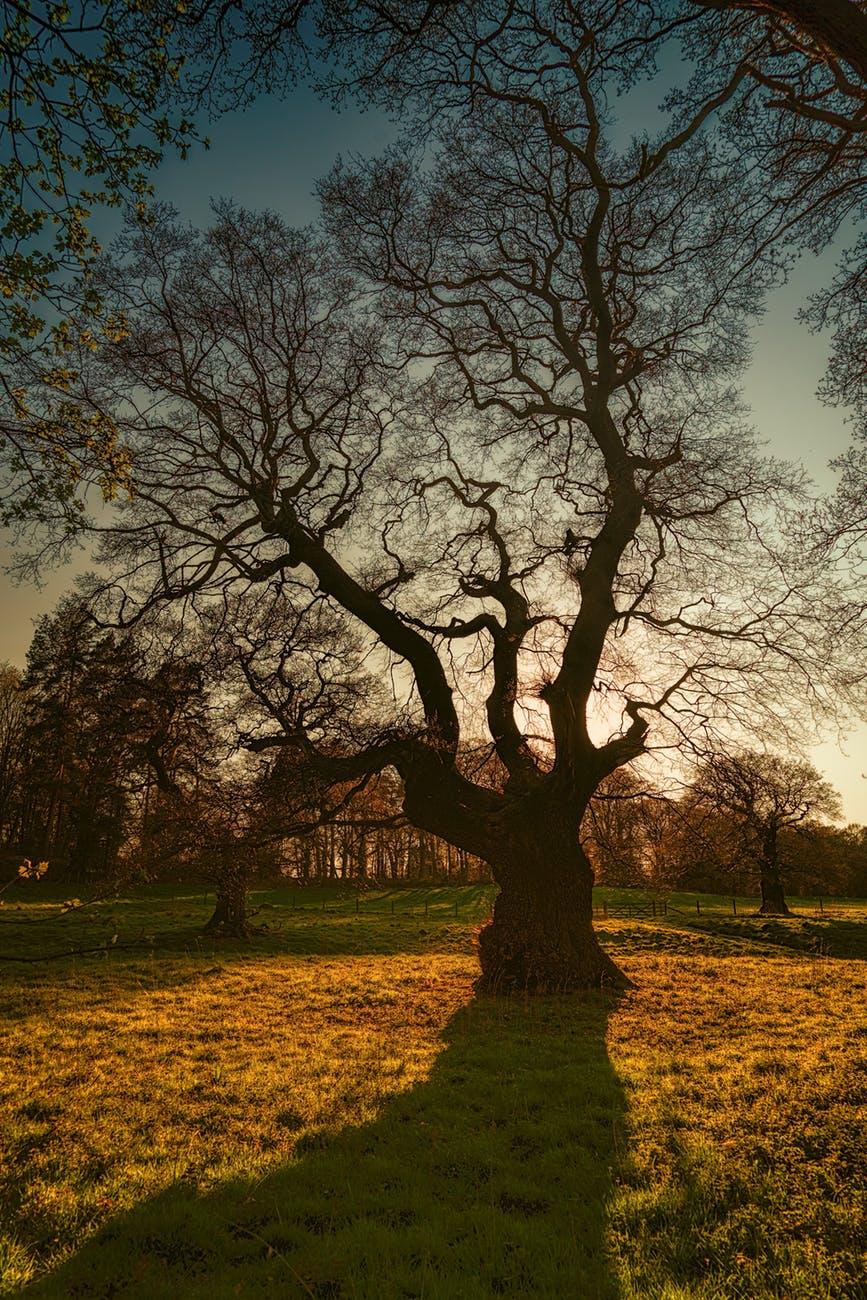 faith tree.jpeg