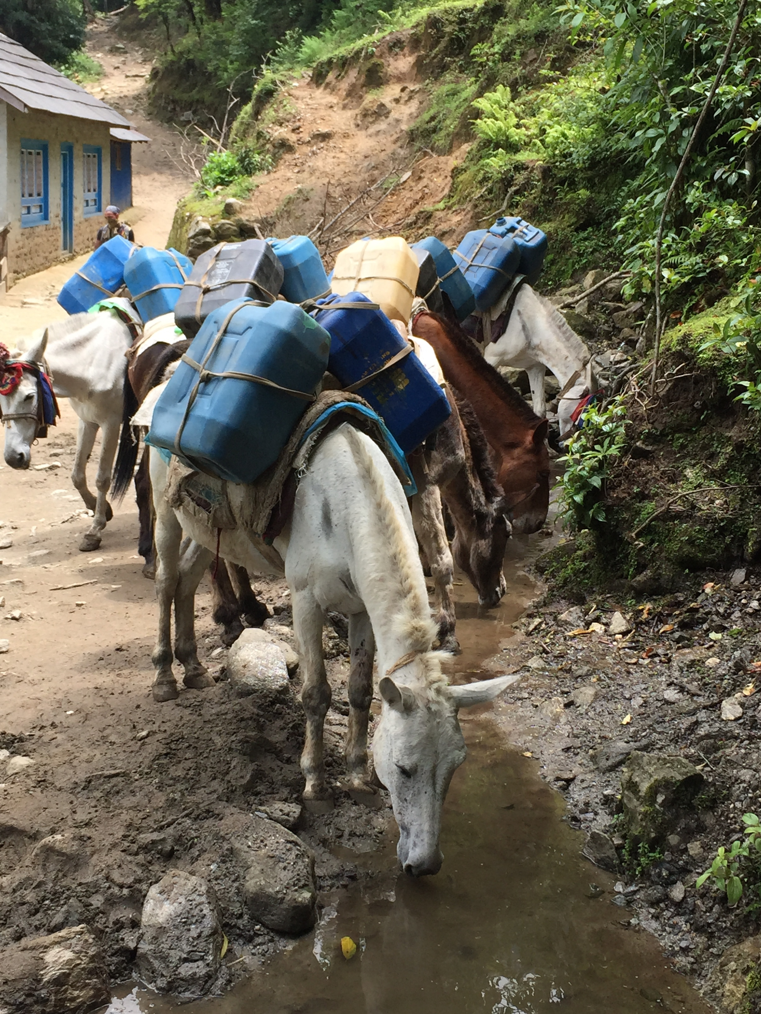 Further up the mountain, most goods are delivered by porter or mule train.
