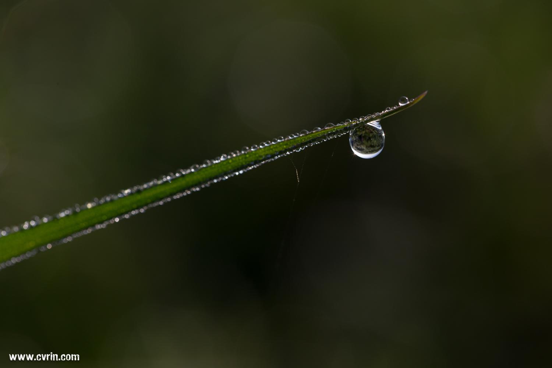 Les gouttes d'eau symbolisent pour moi la vie qui s'écoule et part dans toutes les directions!