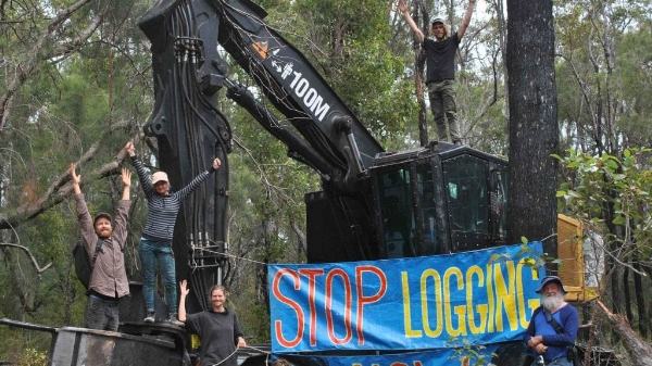 direct+action+saving+forests.jpeg