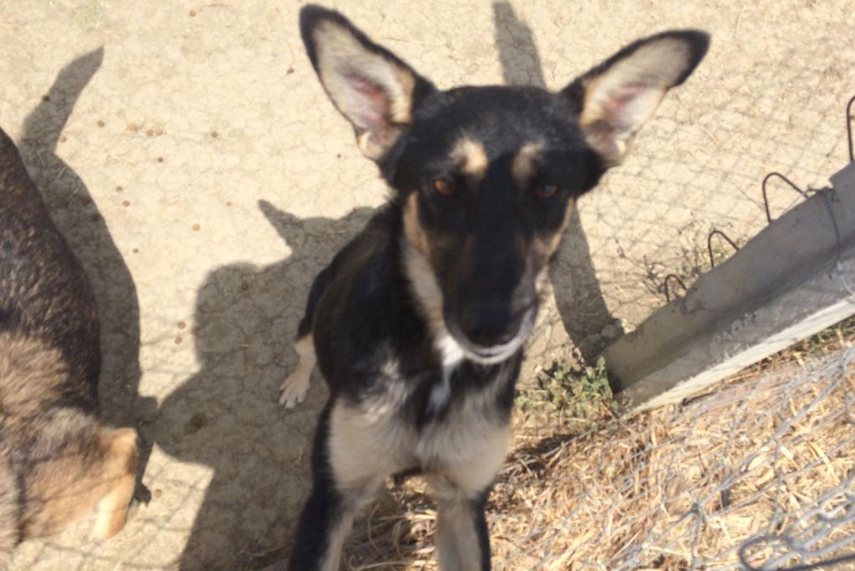 SFT_Adopt_Dogs_Profile_Jasper_01.jpg