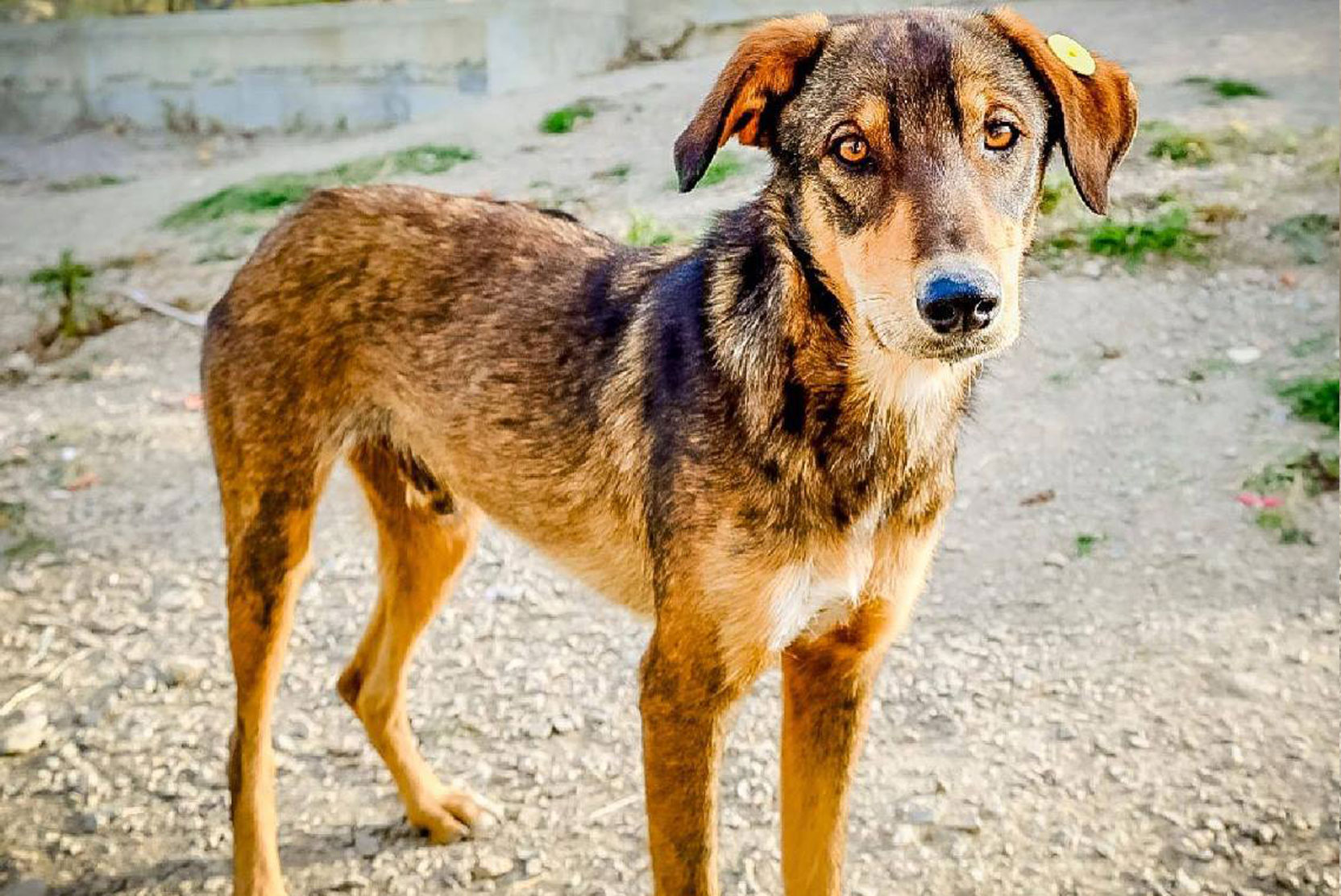 SFT_Adopt_Dogs_Profile_Beach-Boy_01.jpg