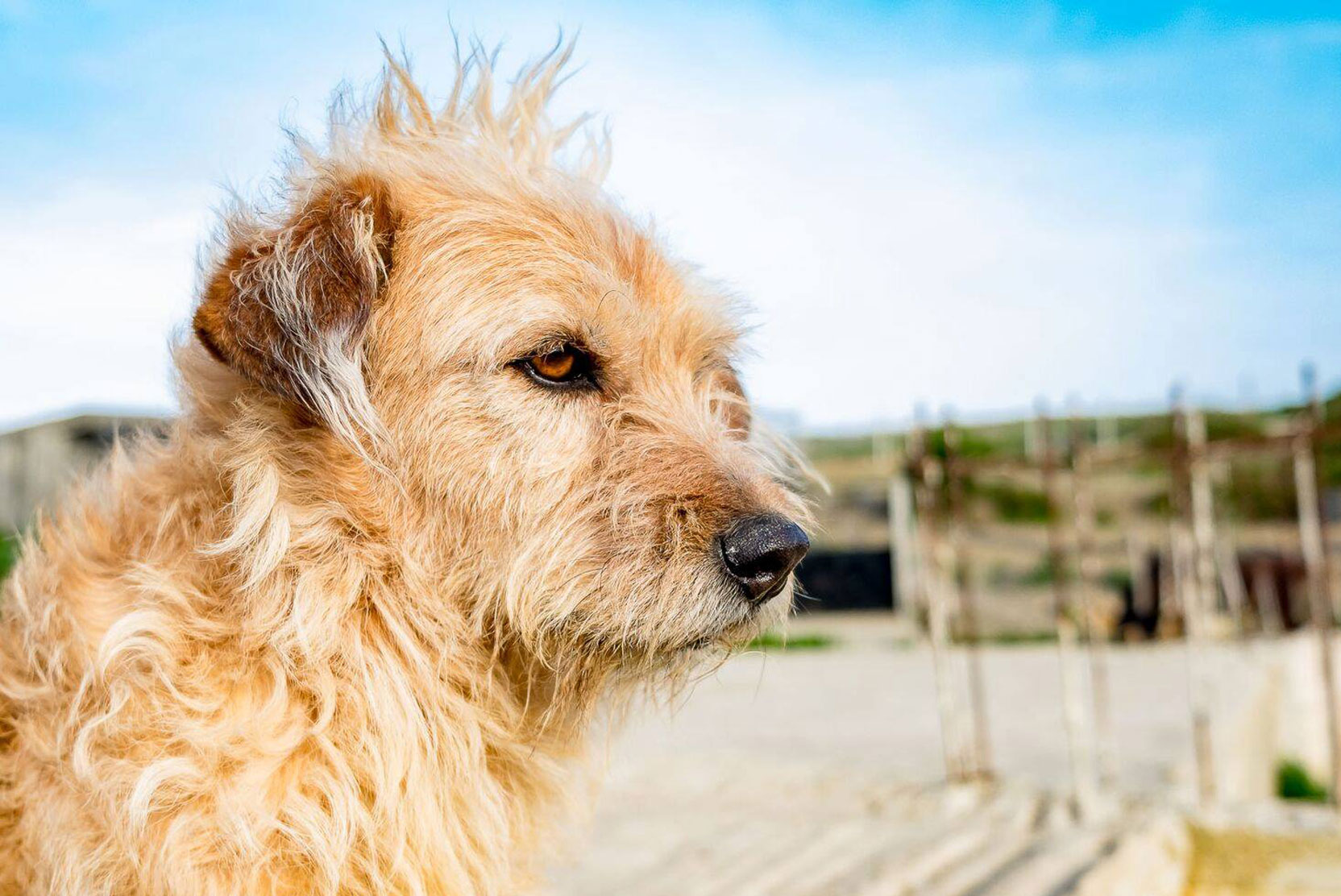 SFT_Adopt_Dogs_Profile_Tony_01.jpg