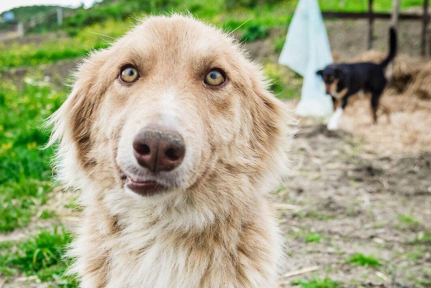 SFT_Adopt_Dogs_Profile_Teddy_01.jpg