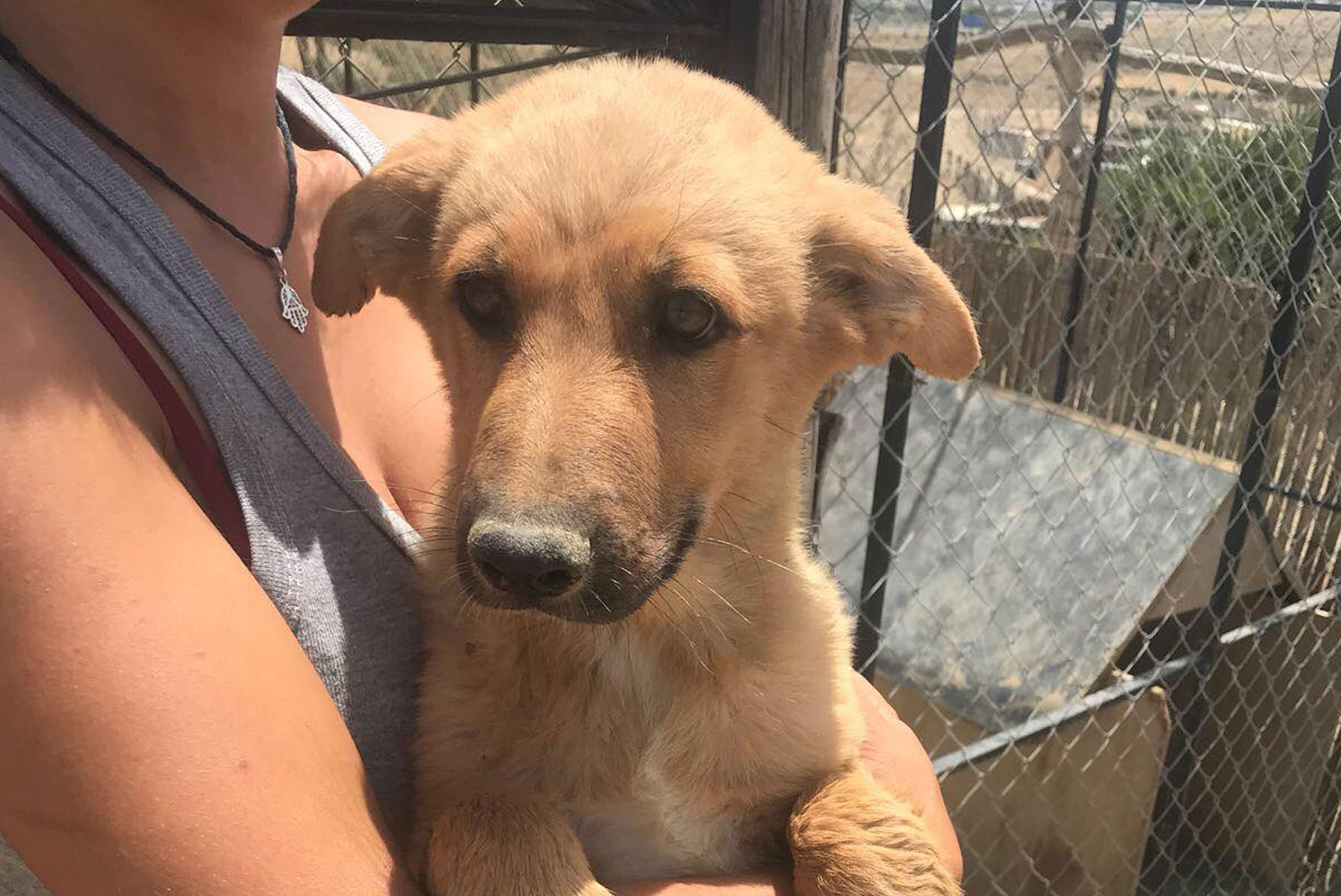 SFT_Adopt_Dogs_Profile_Po_01.jpg