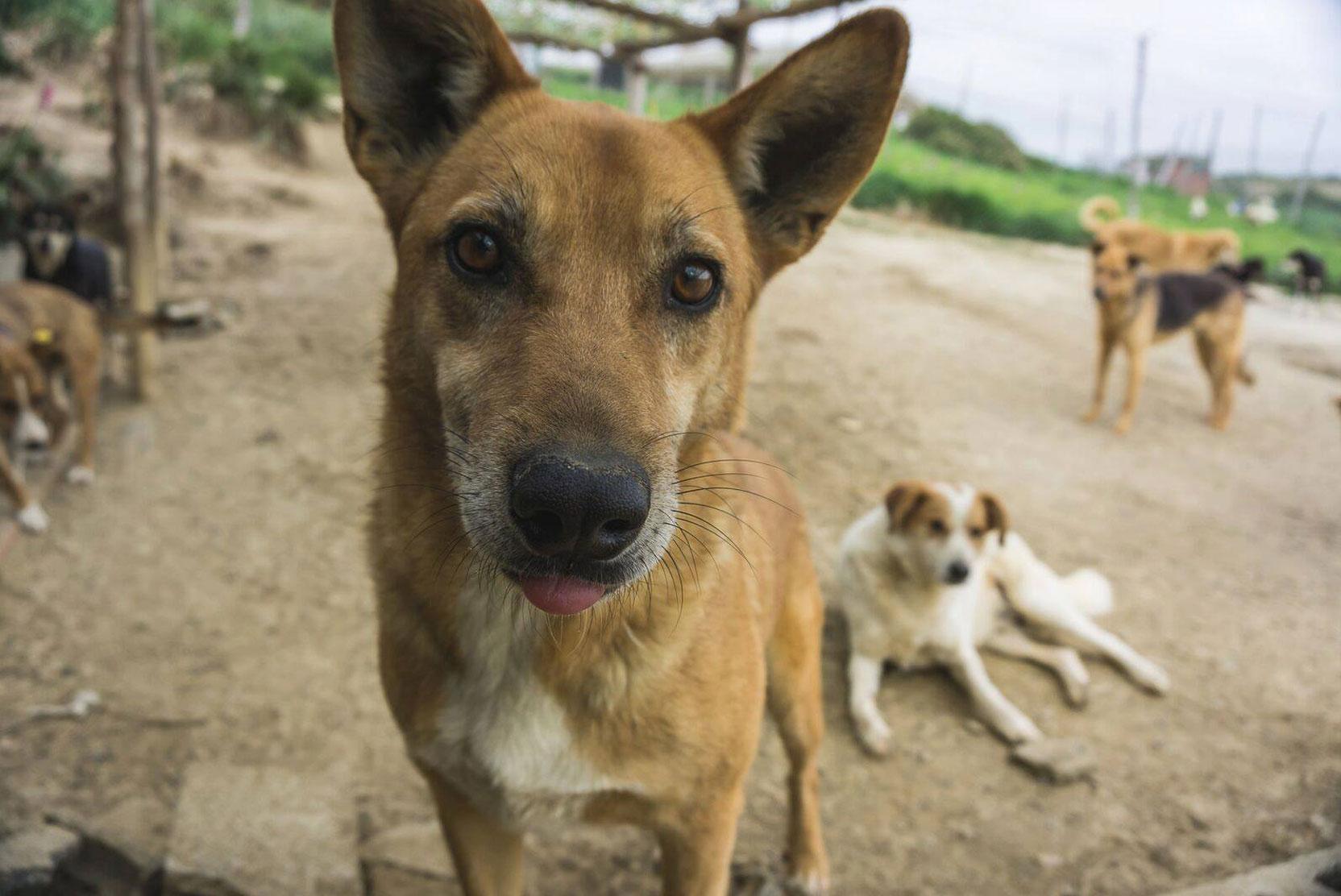 SFT_Adopt_Dogs_Profile_Rex_01.jpg