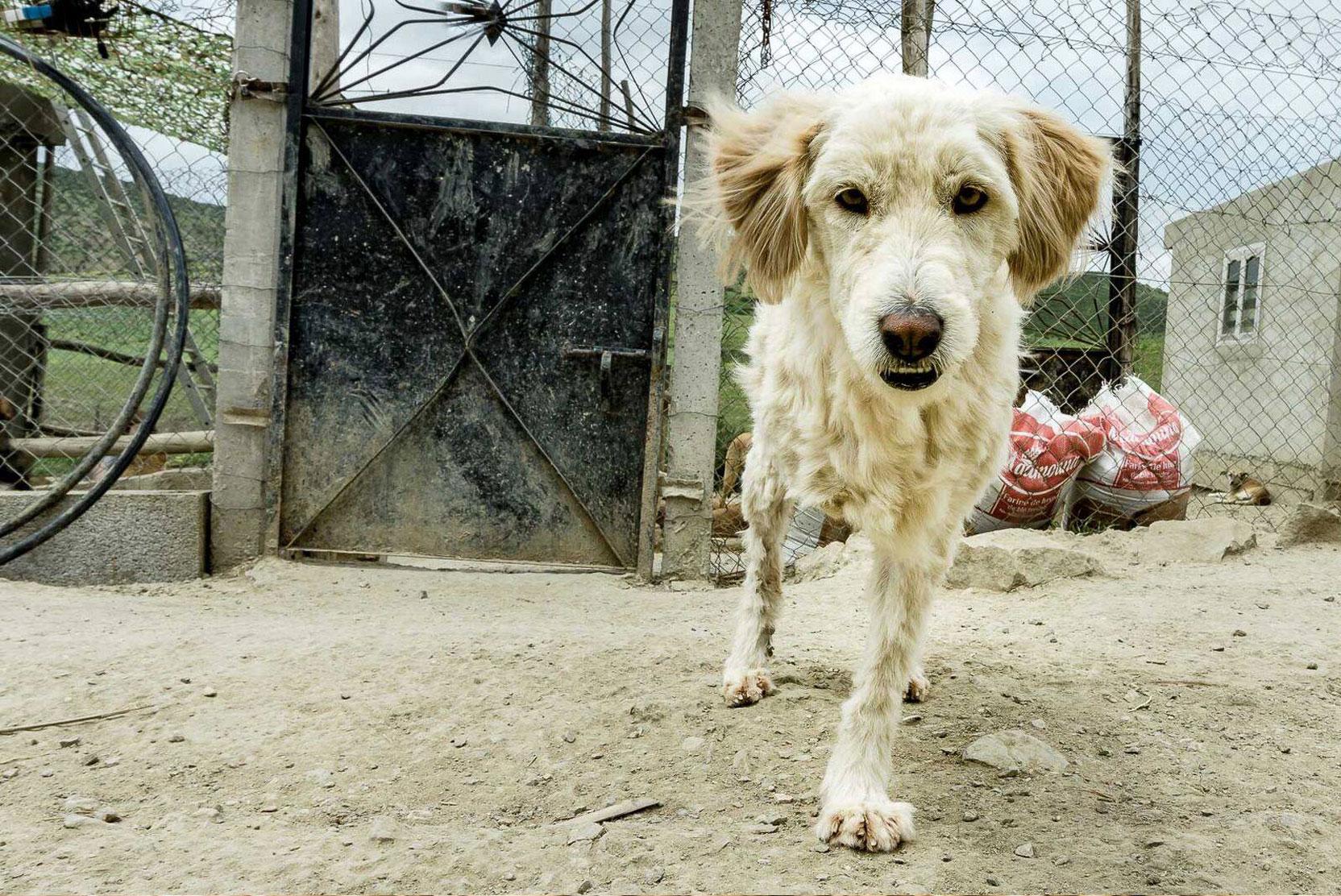 SFT_Adopt_Dogs_Profile_Neige_01.jpg