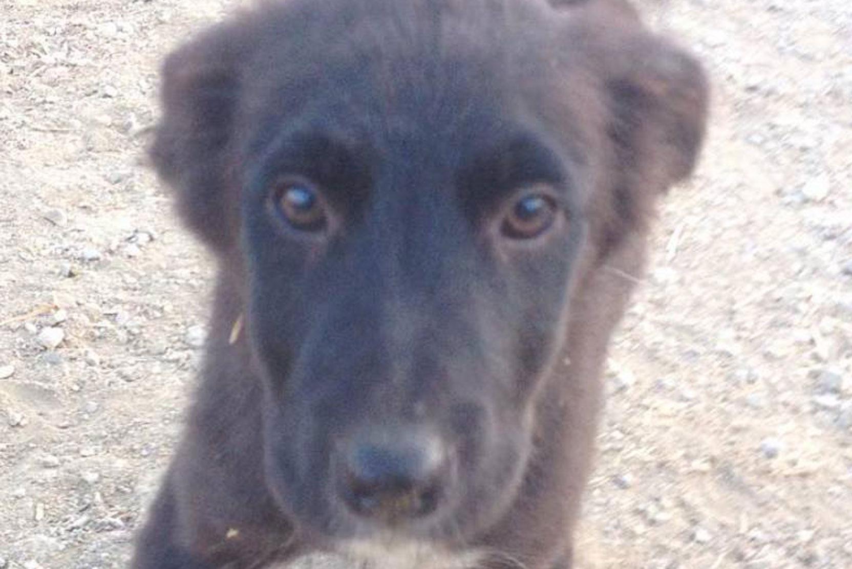 SFT_Adopt_Dogs_Profile_Jessie_01.jpg