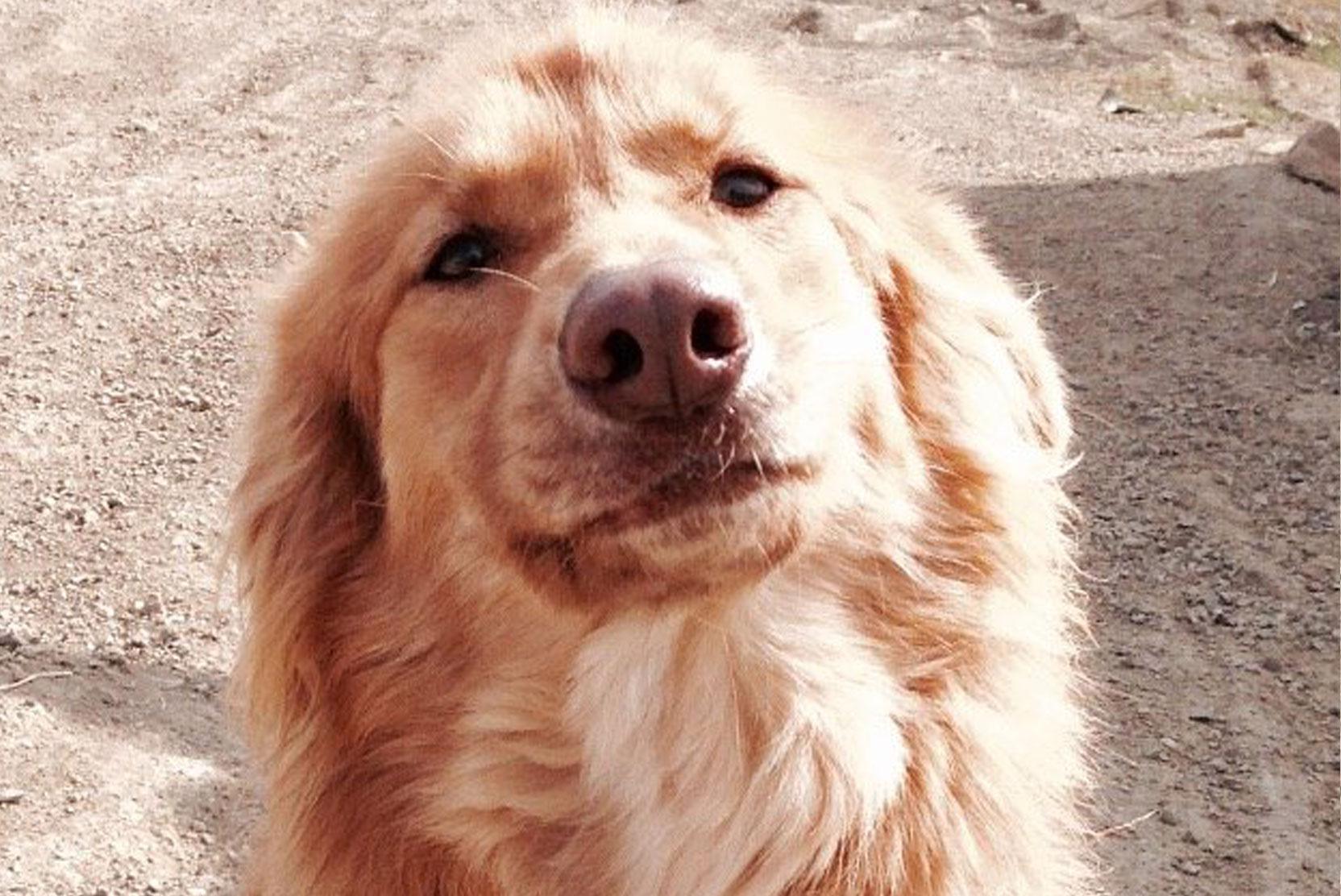 SFT_Adopt_Dogs_Profile_Leona_01.jpg