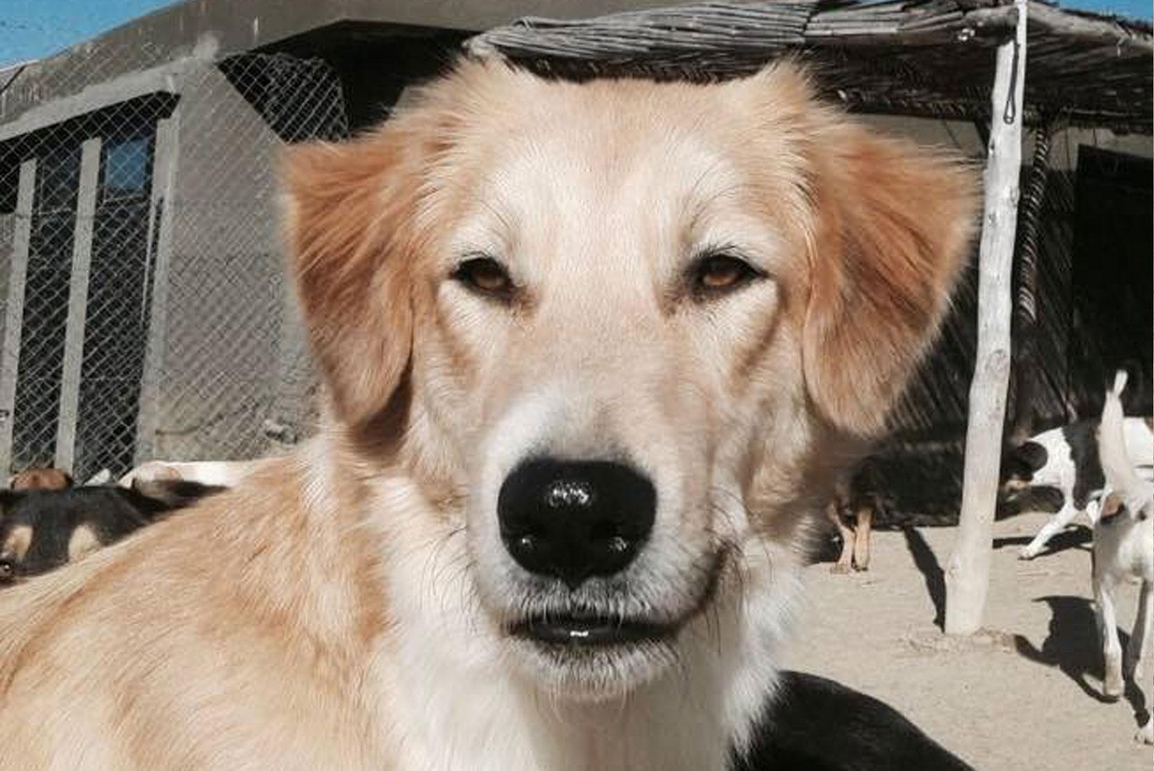 SFT_Adopt_Dogs_Profile_Laddie_01.jpg