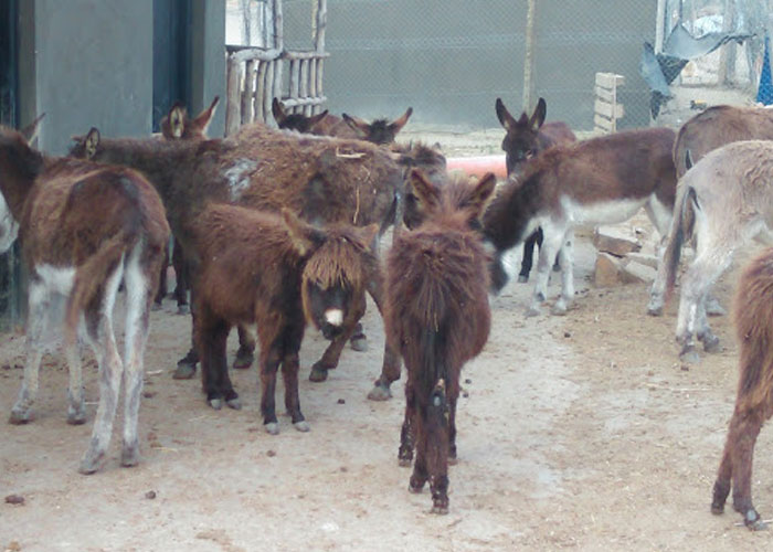 Some of the donkeys rescued from a life of burden and mistreatment.