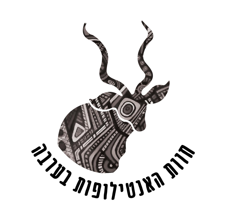 antilope-15.jpg