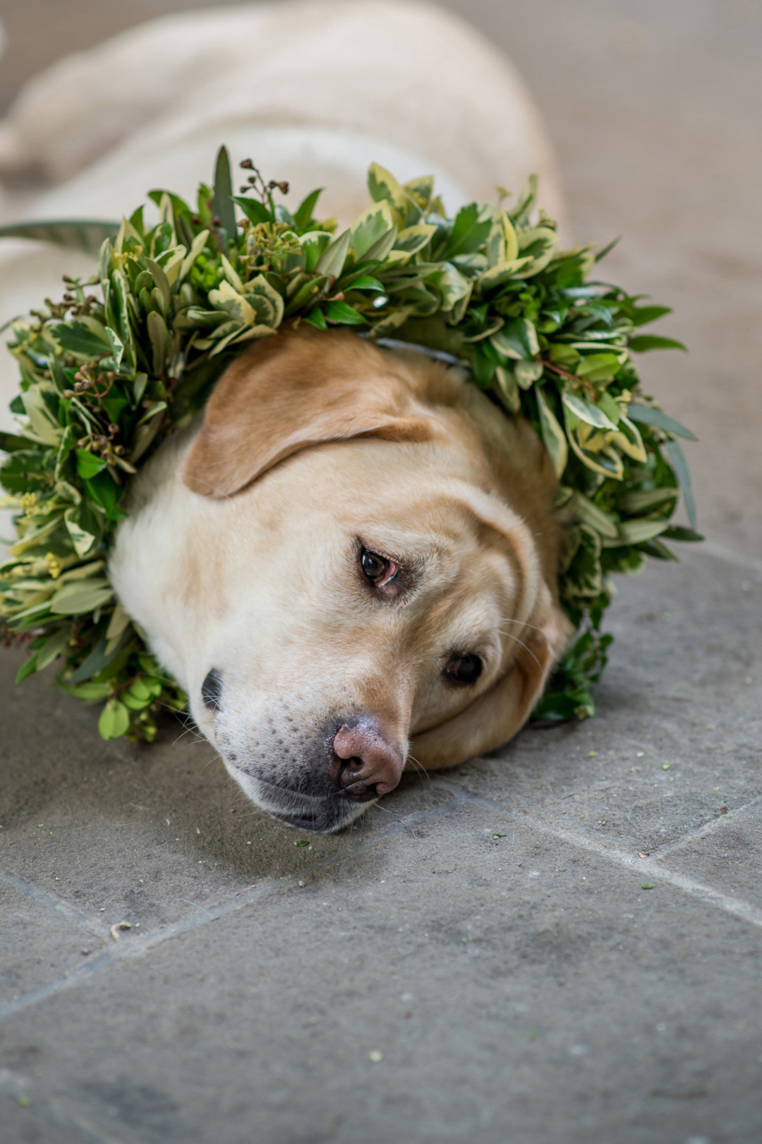 Chicago Wedding Puppy Julia Franzosa Photography