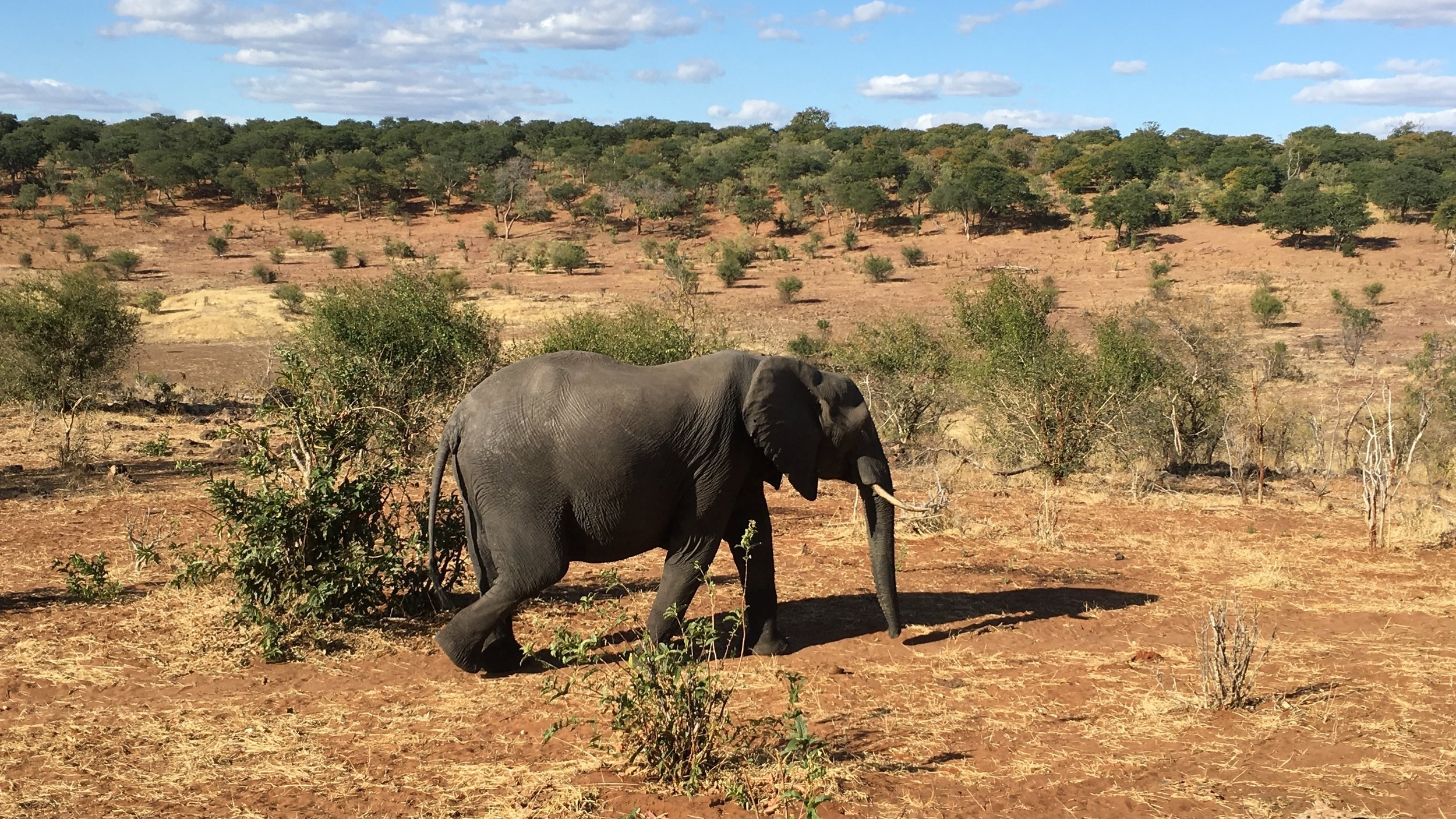 BOTSWANA Safari Revisited 8 Days