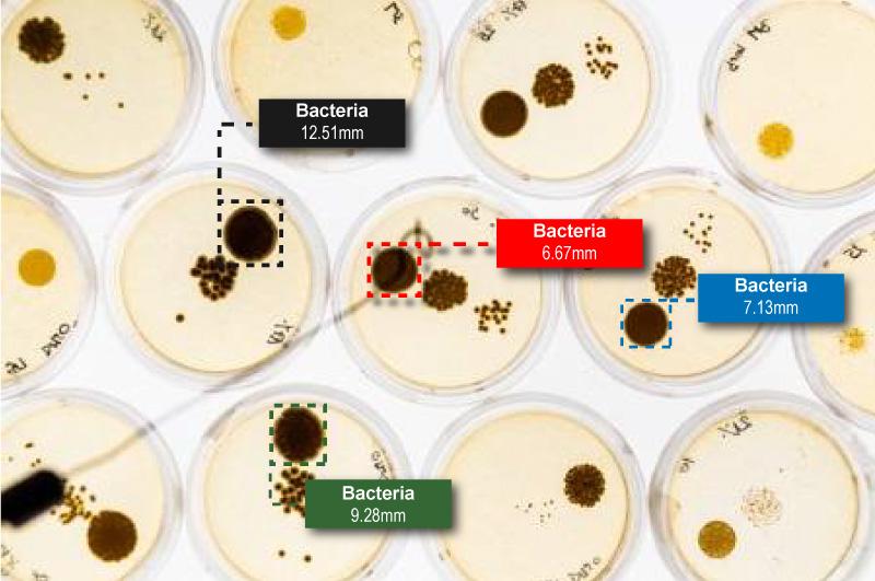 Bacteria_Update.jpg