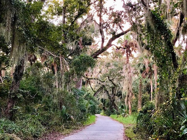 Took a nature walk this morning down the palm coast trails. -  #photographylife #photography #photographer #photooftheday #photo #nature #photographylovers #photographylover #photographyislife #photographysouls #love #naturephotography #photoshoot #photographyeveryday #travel #photographyart #photographyislifee #photographyy #art #photographyoftheday #photographystudio #picoftheday #visualoflife #photographylove #photographyprops #photographyisart #travelphotography #photographyaddict #photography_aks #photographerlife