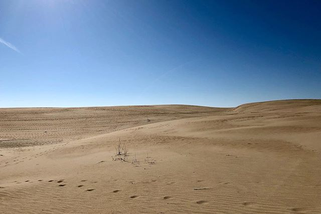 The sand dunes of North Carolina. #letsgetlost #sand #northcarolina #beach #adventure #placestovisit