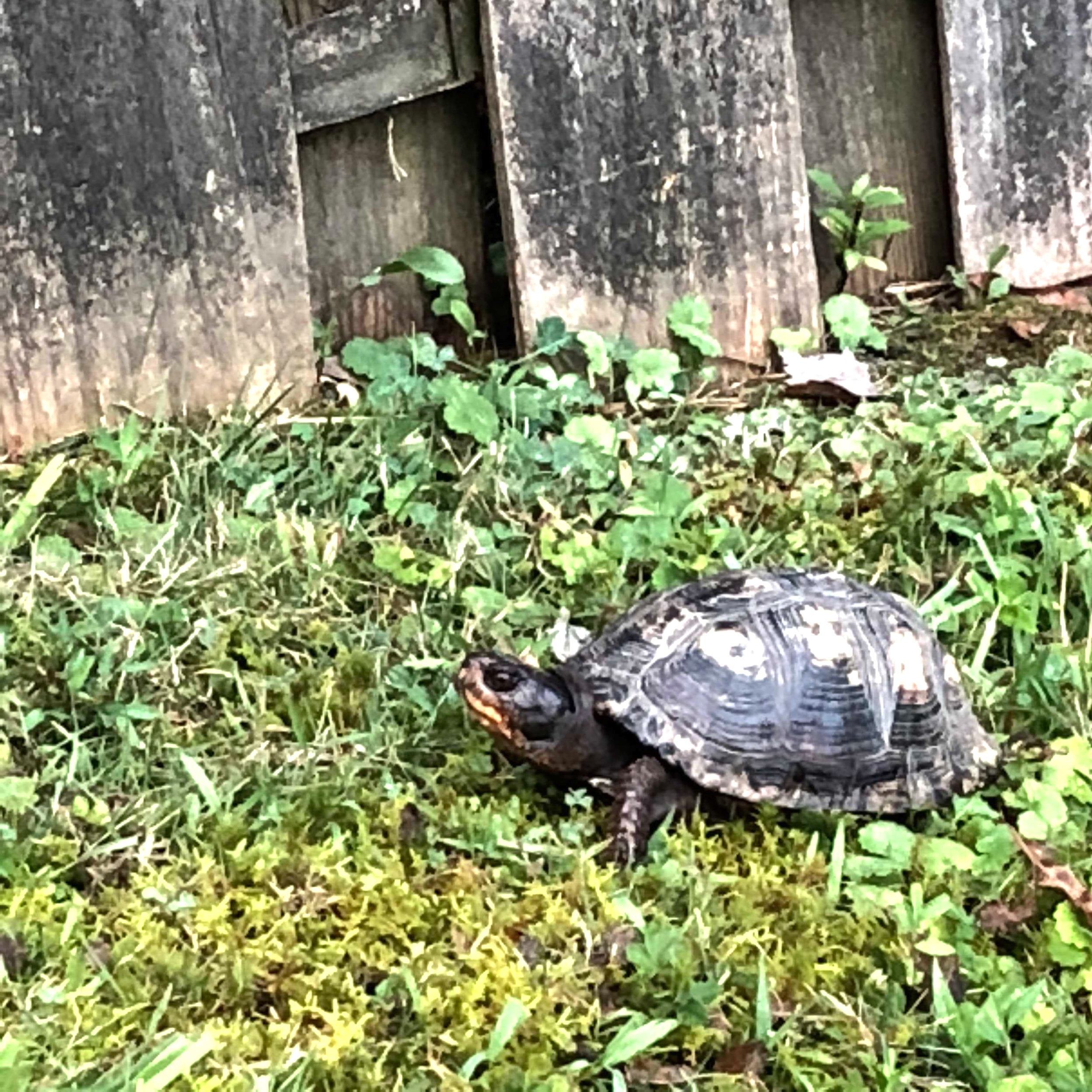 turtle-eclipse.jpg