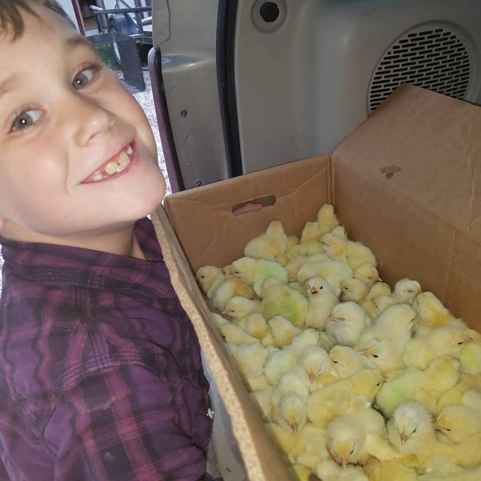 cohen chicks.jpg