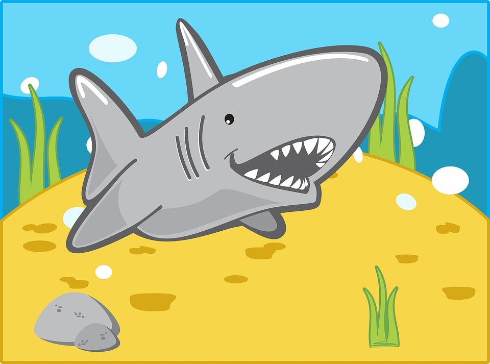 Double teeth Baby Teeth Shark