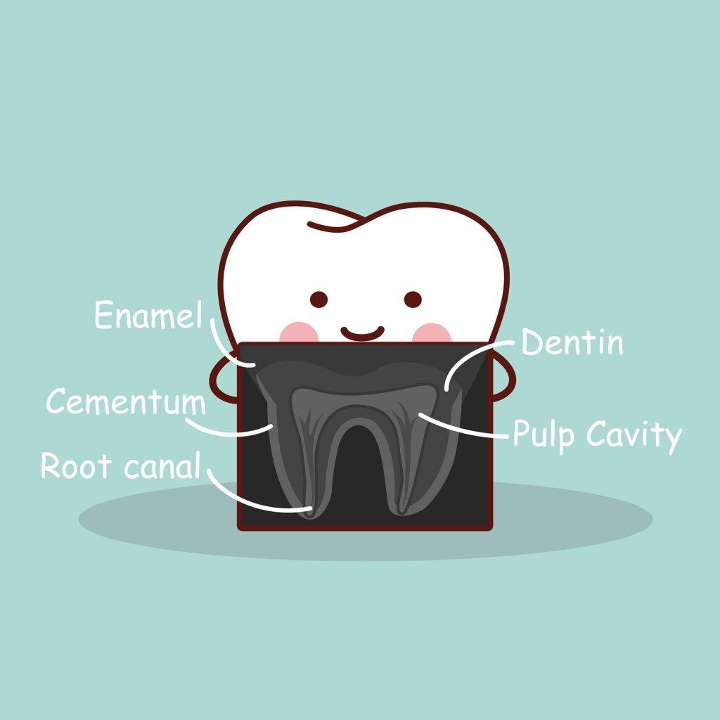 Dental X-ray Blacktown Dentist Seven Hills Dentist.jpg