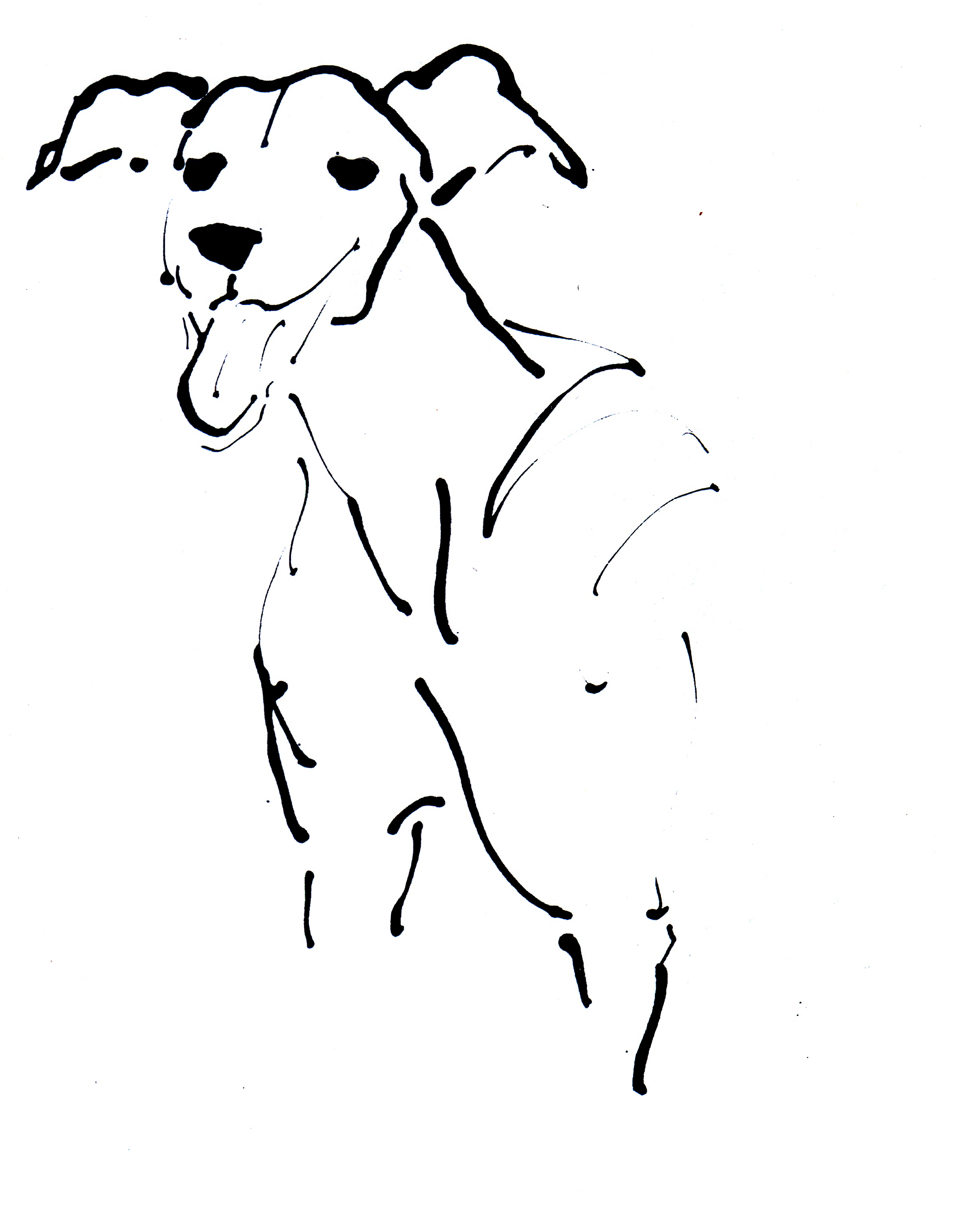 DIANA, a rescue greyhound.jpg