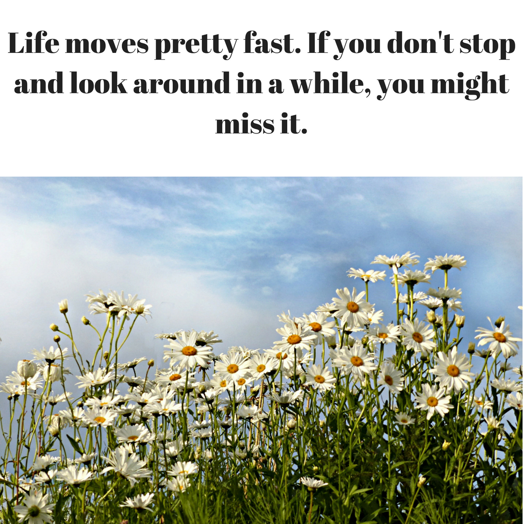 Life moves pretty fast. If you don't stop and look around in a while, you might miss it..jpg
