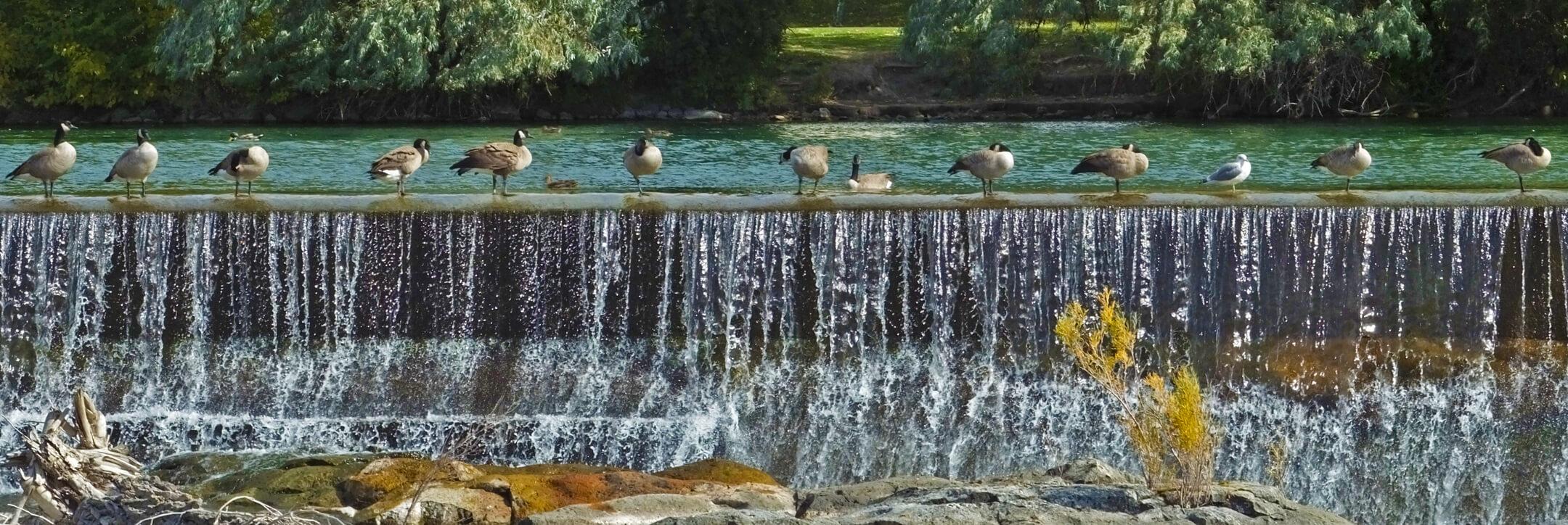 idaho-falls-geese-shield-insurance