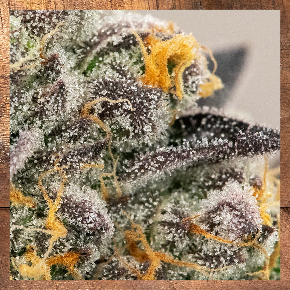 GSC Trichomes2.png