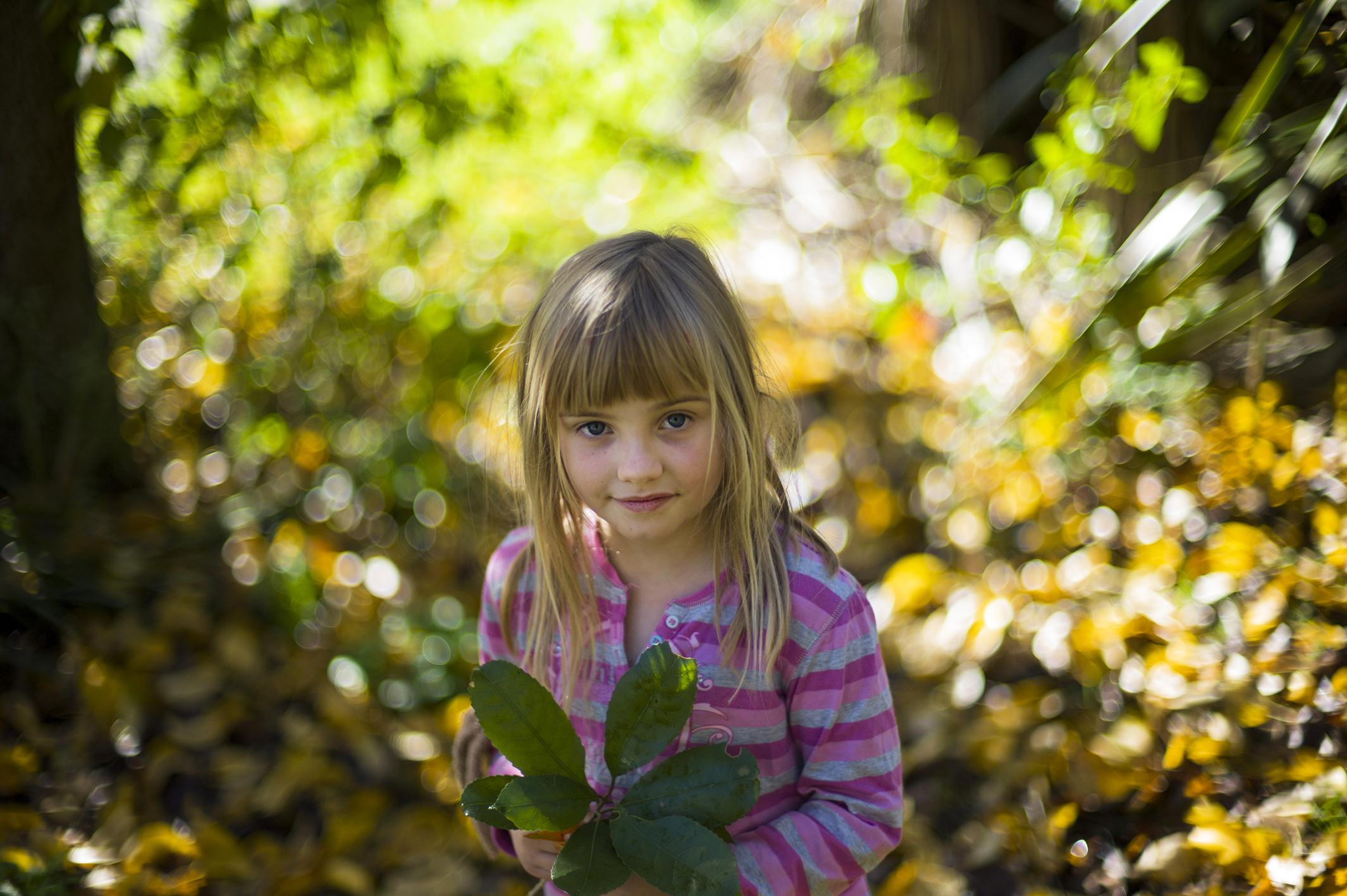 「ニュージーランドの森の中」